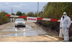 На Крымском полуострове обнаружили 4 скотомогильника в карантинной зоне АЧС