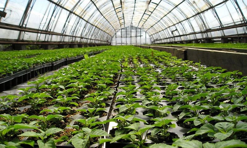 На Камчатке будут свои помидоры и огурцы