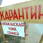В Ленинградской области в продаваемой свинине обнаружен вирус АЧС