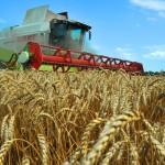 В Агропромышленный комплекс Ставрополья будет вложено более 65 миллиардов рублей