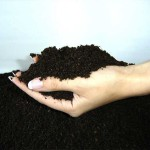 Томскими учеными разработана новая технология защиты плодородного пласта земли