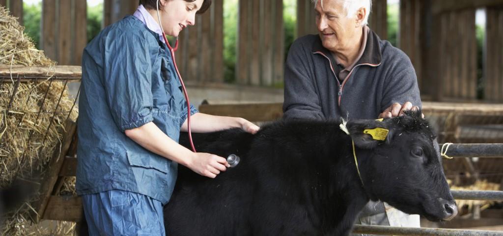 Министерство сельского хозяйства Российской Федерации разработало новые правила по содержанию крупного рогатого скота
