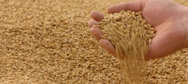 Время торговать зерном