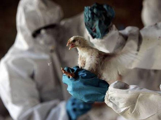 В Крымской Республике обнаружили вирус ньюкаслской болезни птиц