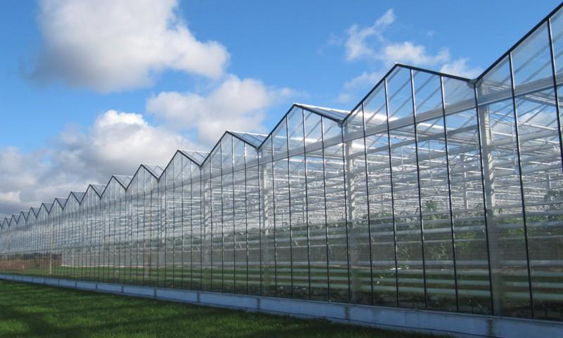 В Иркутской области намерены модернизировать существующие тепличные комплексы