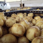 В министерстве сельского хозяйства РФ обсудили развитие картофелеводства