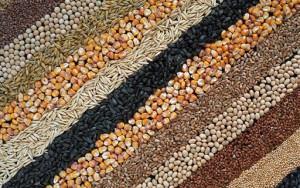 Товар плодовоовощной отрасли растениеводства