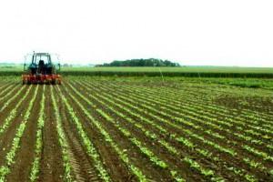 Трактор обрабатывает поле в РФ