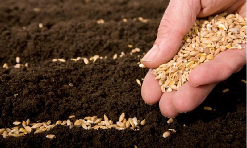 Проблемы производства собственного семенного материала в России
