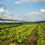 Современные технологии в растениеводстве: новые подходы и решения