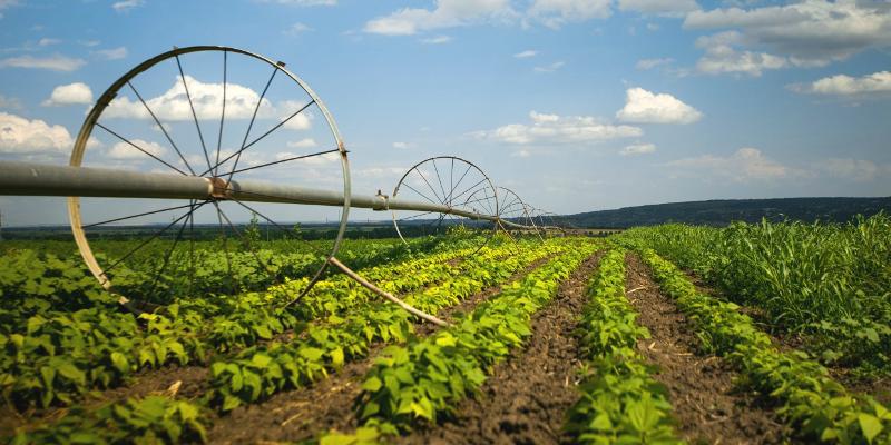 высококачественная продукция растениеводства