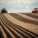 Кредиторская задолженность на сельхозпредприятии