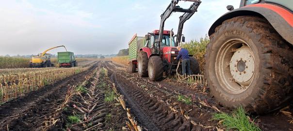 Развитие сельского хозяйства в РФ