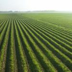 Отрасли растениеводства в России