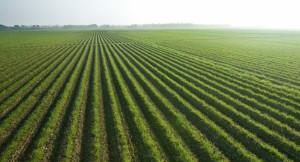 Отрасли растениеводства в РФ