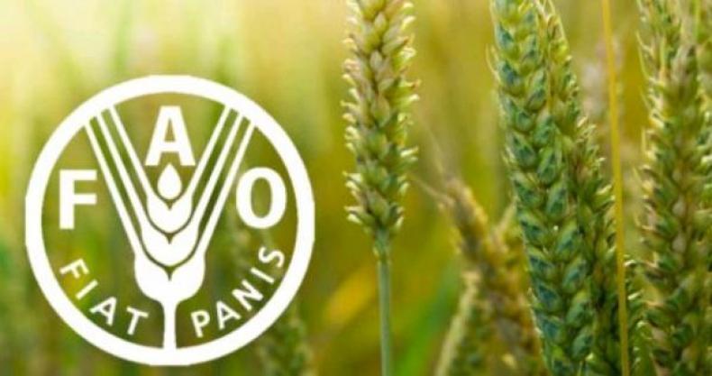 Сельскому хозяйству Центральной Азии и части Ближнего Востока грозит ржавчина пшеницы – сообщение ФАО