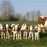 Якутские фермеры не умеют выращивать скот