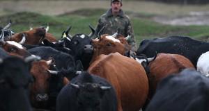 Предприятия животноводческого комплекса