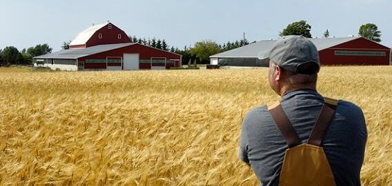 Бизнес-план для фермера