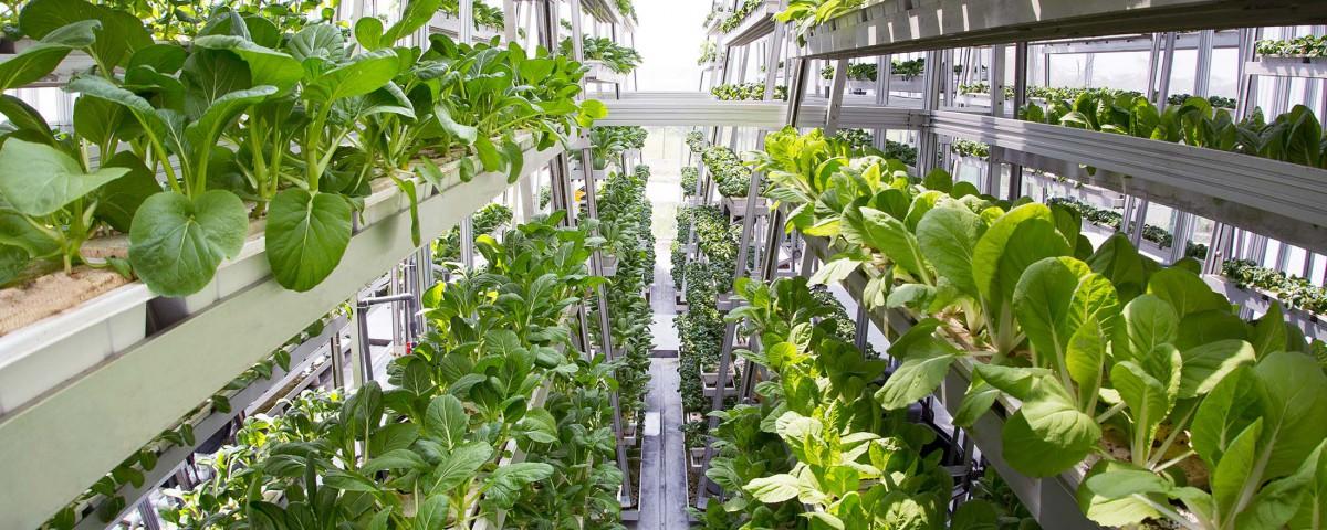 Революционные технологии растениеводства