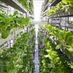 Новые технологии растениеводства