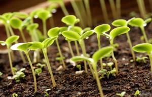 Процесс роста растений в теплице