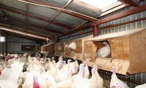 Поддержка молодых фермерских хозяйств
