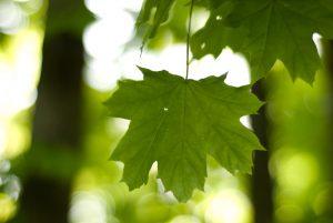 Процесс преобразования энергии света в энергию химических связей органических веществ