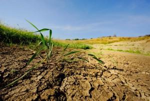 внедрение принципа минимальной обработки почвы