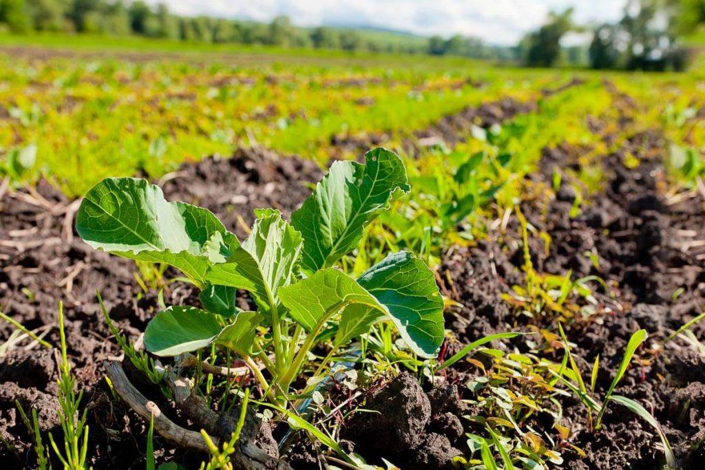 Использовании земли с целью выращивания сельскохозяйственных культур