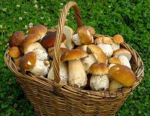 Корзина белых грибов