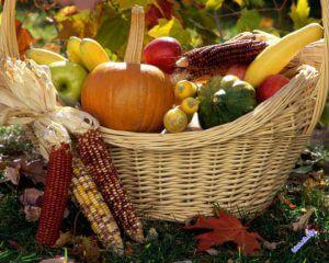 Теоретические основы растениеводства