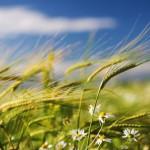 Технологии в растениеводстве, теория и практика