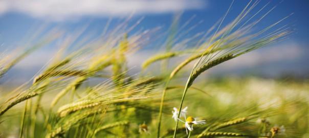 Технические сельхозкультуры