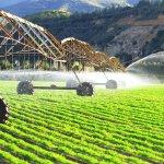 Растениеводство в России: место отрасли и основные направления в сельском хозяйстве