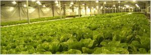 Растениеводство в тепличных условиях