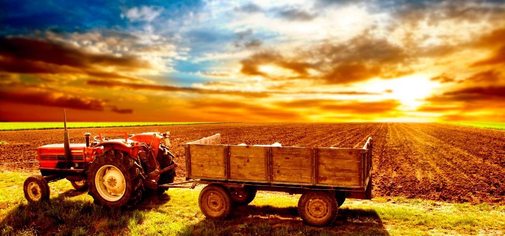 Базовые законы растениеводства