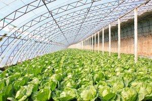 Применение теплиц в растениеводстве