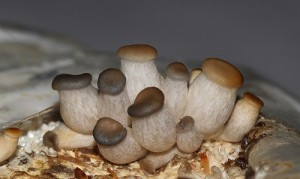 Способы выращивания грибов
