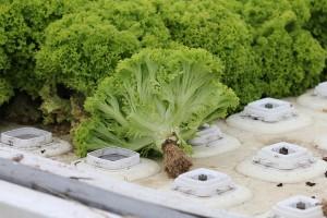 Прогрессивные методы растениеводства