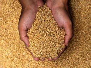 Продукция отрасли растениеводства