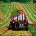 Анализ производства продукции растениеводства
