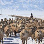 Механизация и технологии животноводства