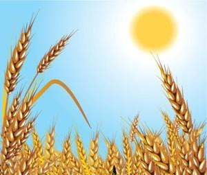 На картинке изображен один из видов растениеводства