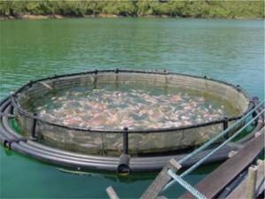 Садковое рыбоводство