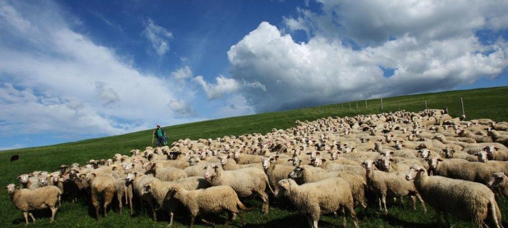 Современное животноводство