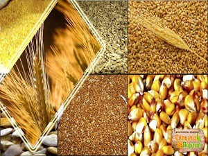 Виды продукции растениеводства