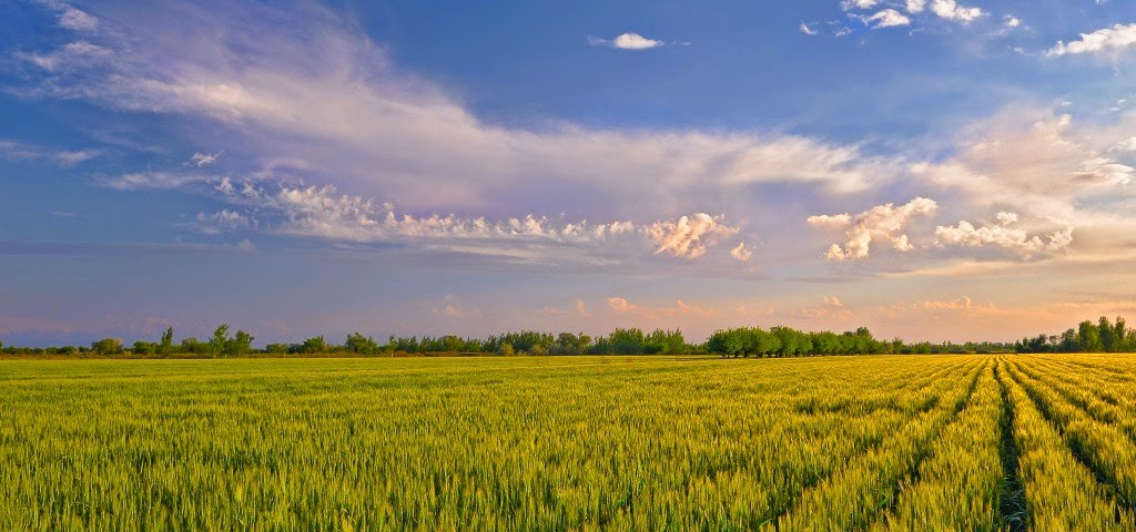 Эффективность продукции растениеводства