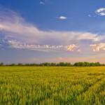 Экономическая эффективность продукции растениеводства