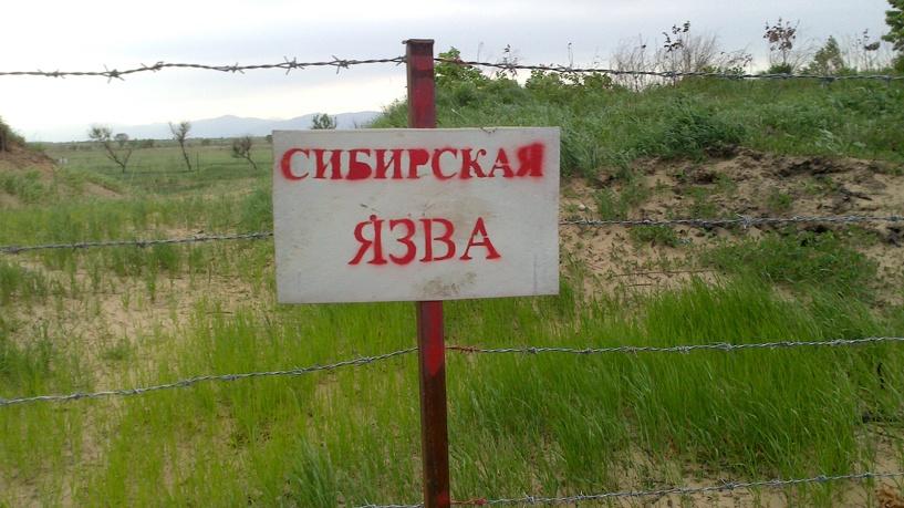 Челябинские скотомогильники с сибирской язвой контролируются ветеринарной службой